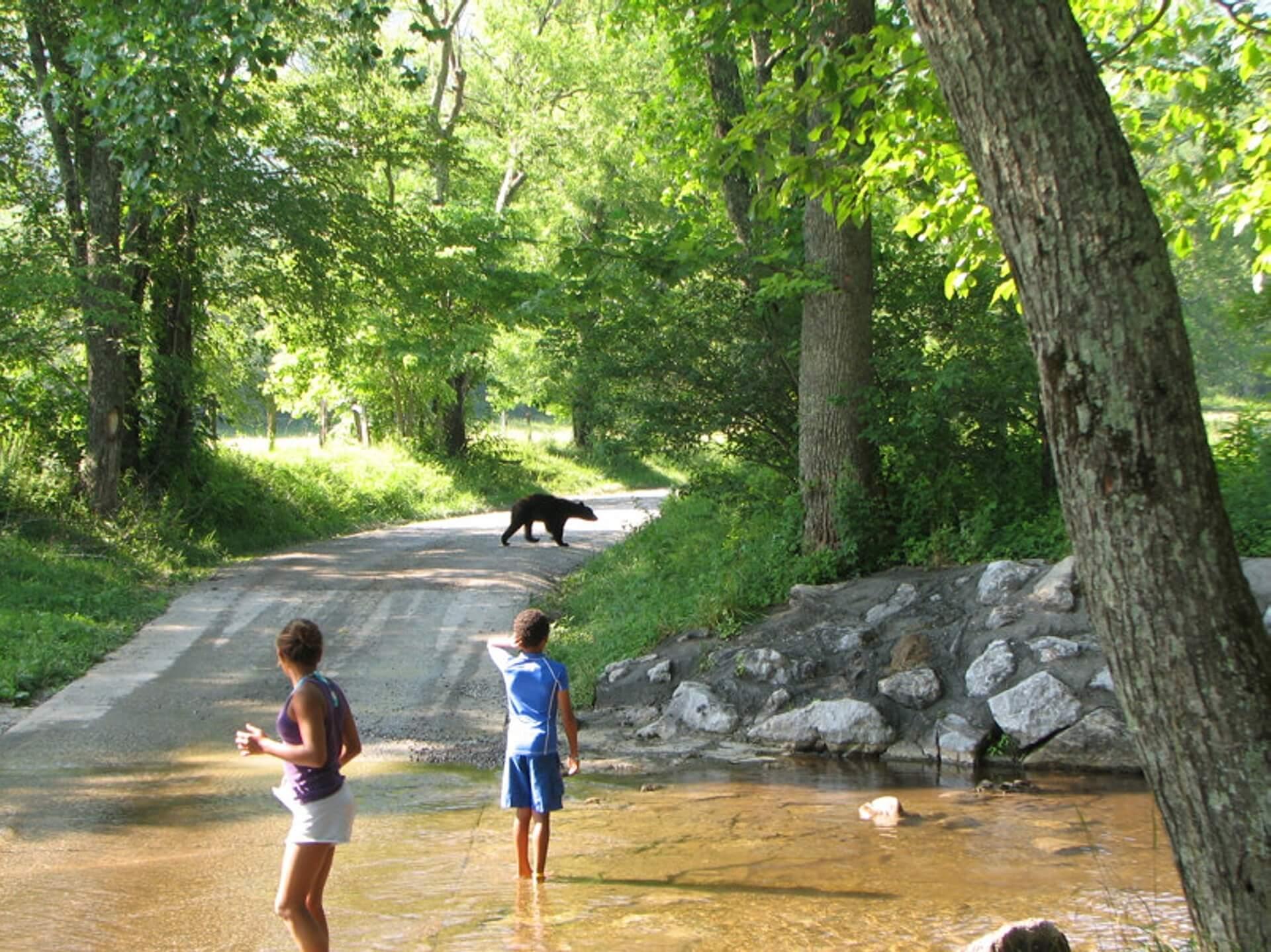 er loopt een beer op de weg