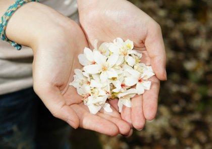 Mediumschap is als zuivere bloem in koesterende handen mediumschap niveau 1 online.jpg