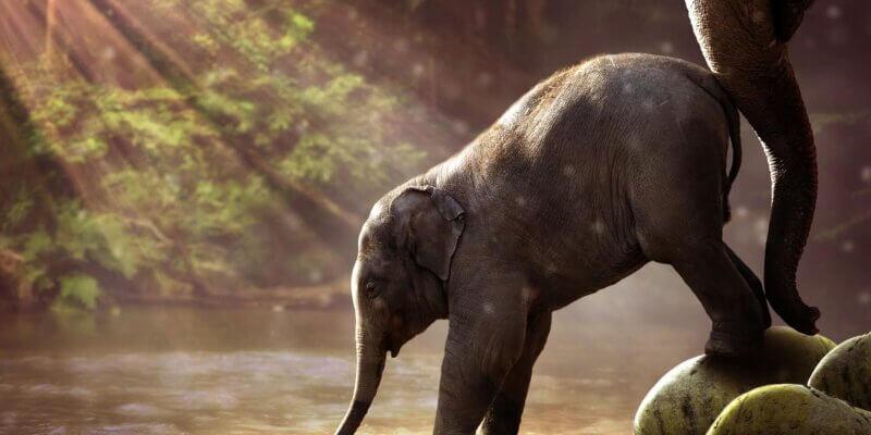 De olifant en het touw