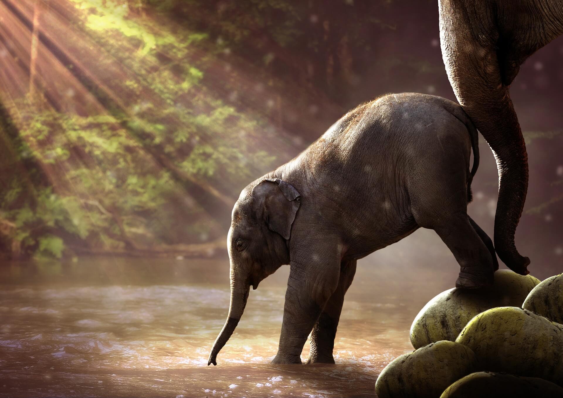olifant en touw