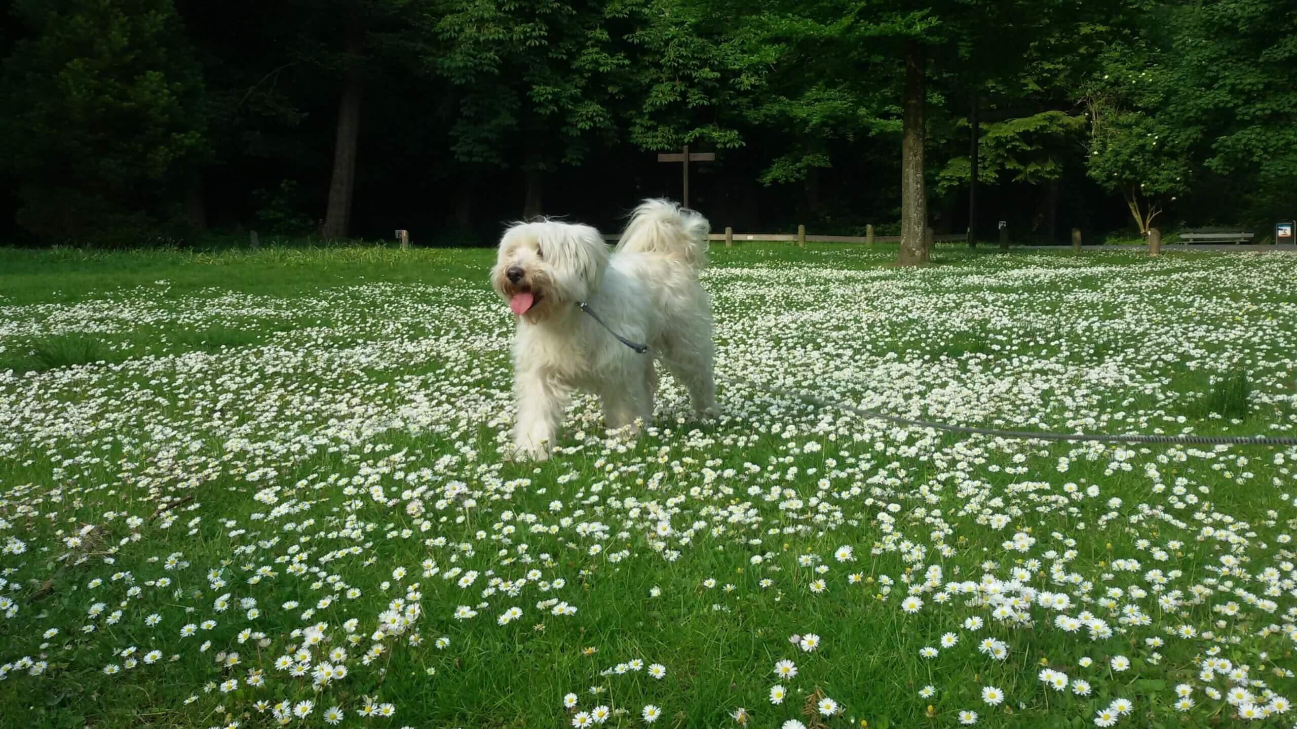 Yara speelt tussen de bloemen