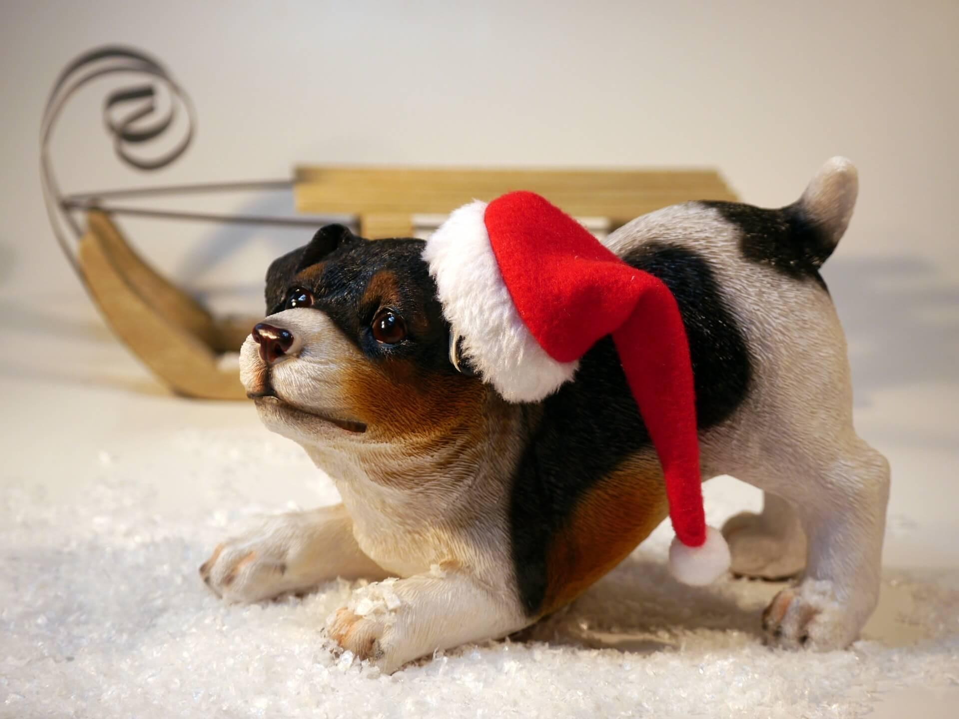 De unieke kerstversiering van deze hond is ede ultieme zelfexpressie. Creativiteit rond kerstmis