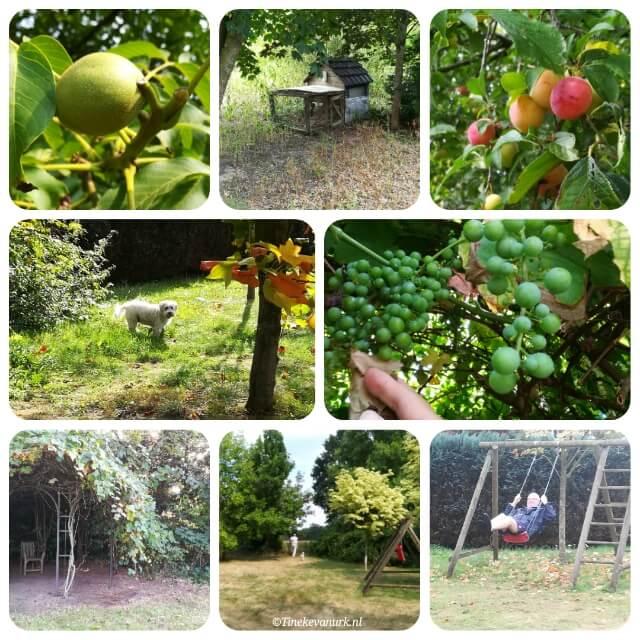 Kom genieten in onze tuin in ringe