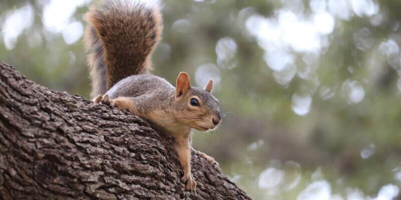 De les van de eekhoorntjes