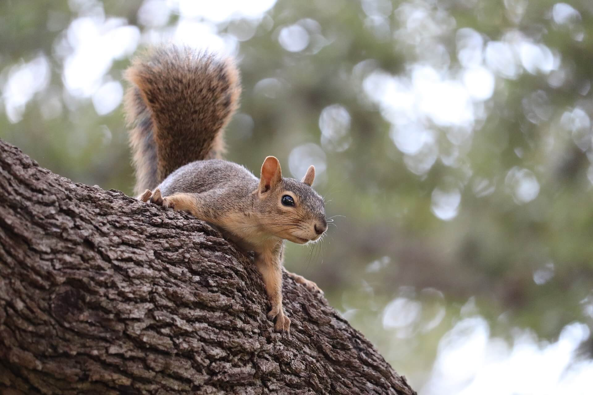 de twee eekhoorntjes niets is groot of klein