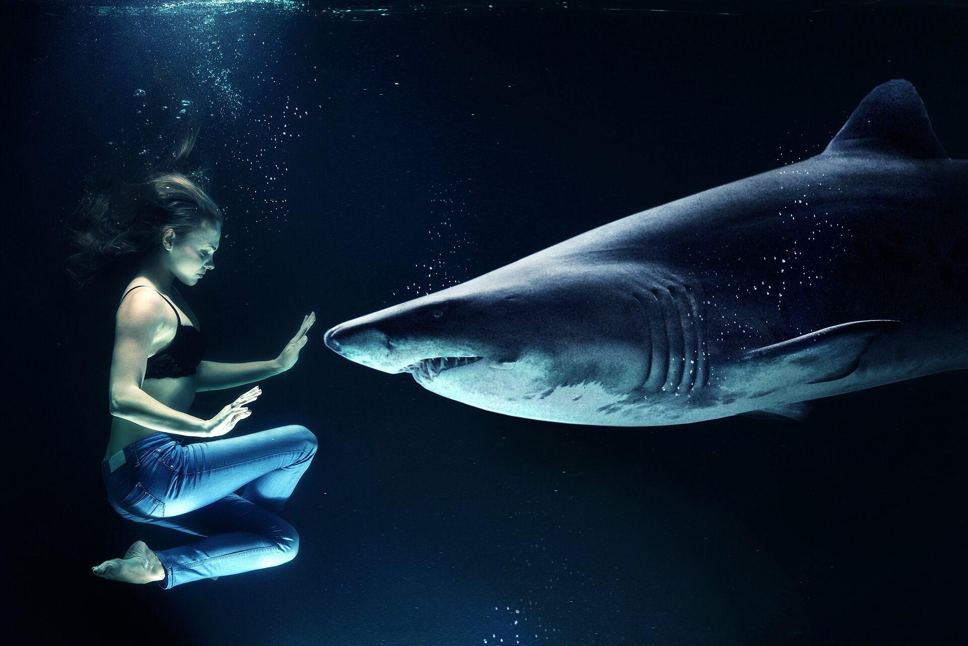 wat als haaien