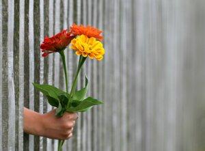Hand met Bloemen door een hek heen